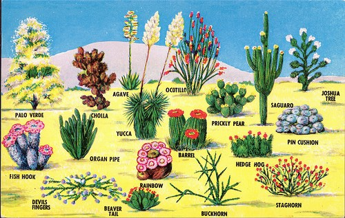 Postcard depicting a variety of cactus plants