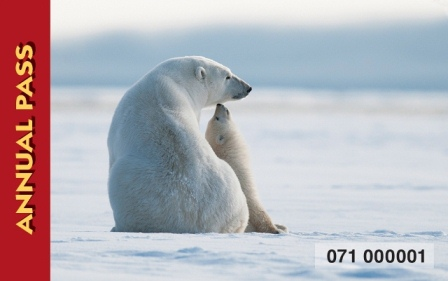 Annual Pass 2016 - polar bears in repose