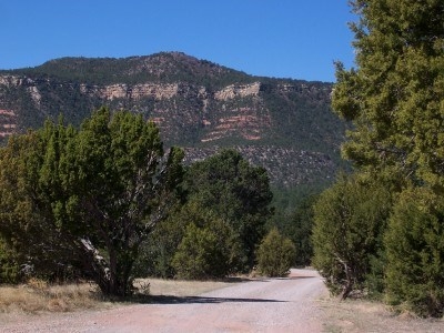 Road leading between pinon and juniper toward mesa