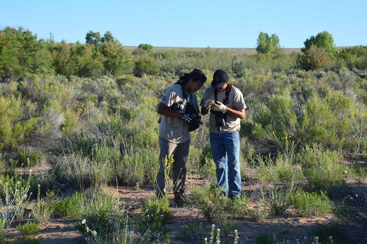 2015 Crew Members Looking for Lizards in the Riparian Area