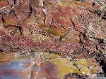 Close up of petrified wood, Petrified Forest National Park5