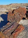 Petrified Forest National Park Scenic-Giant Logs