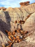 Petrified logs, Blue Mesa