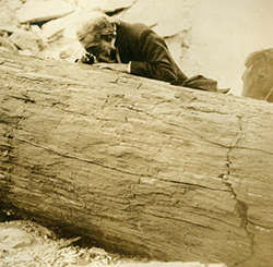 bearded man leans over large log