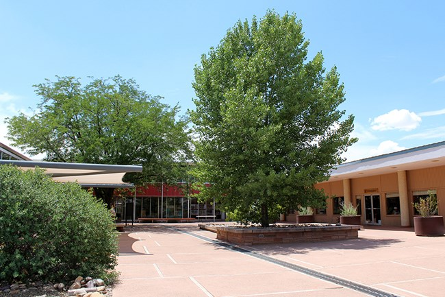 Painted Desert Community Complex plaza with summer trees