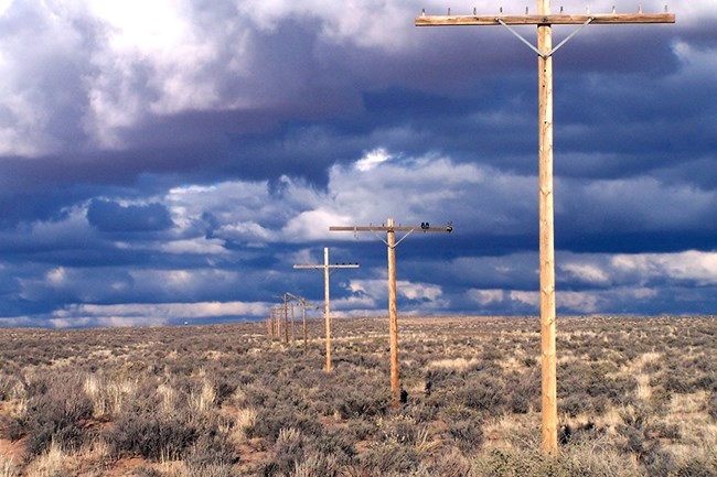 telephone poles on Rt 66