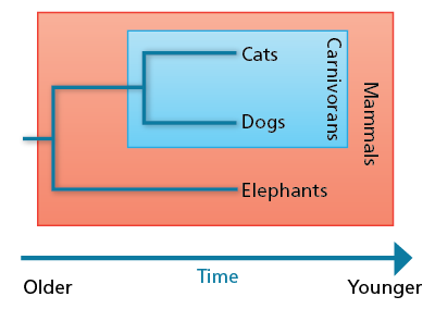 cladogram relating dogs, cats, and elephants