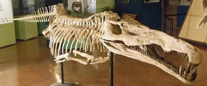 smilosuchus skeleton cast