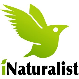 iNaturalist logo with bird