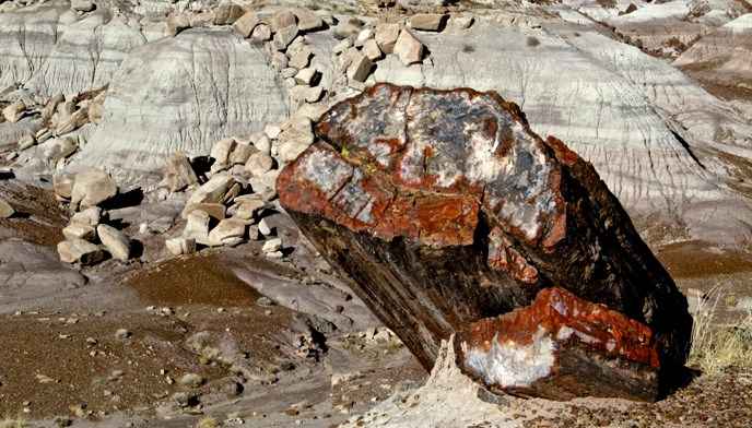 Leandra Melgreen Lewis photograph of a colorful petrified log at Jasper Forest