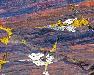 Lichen on petrified log