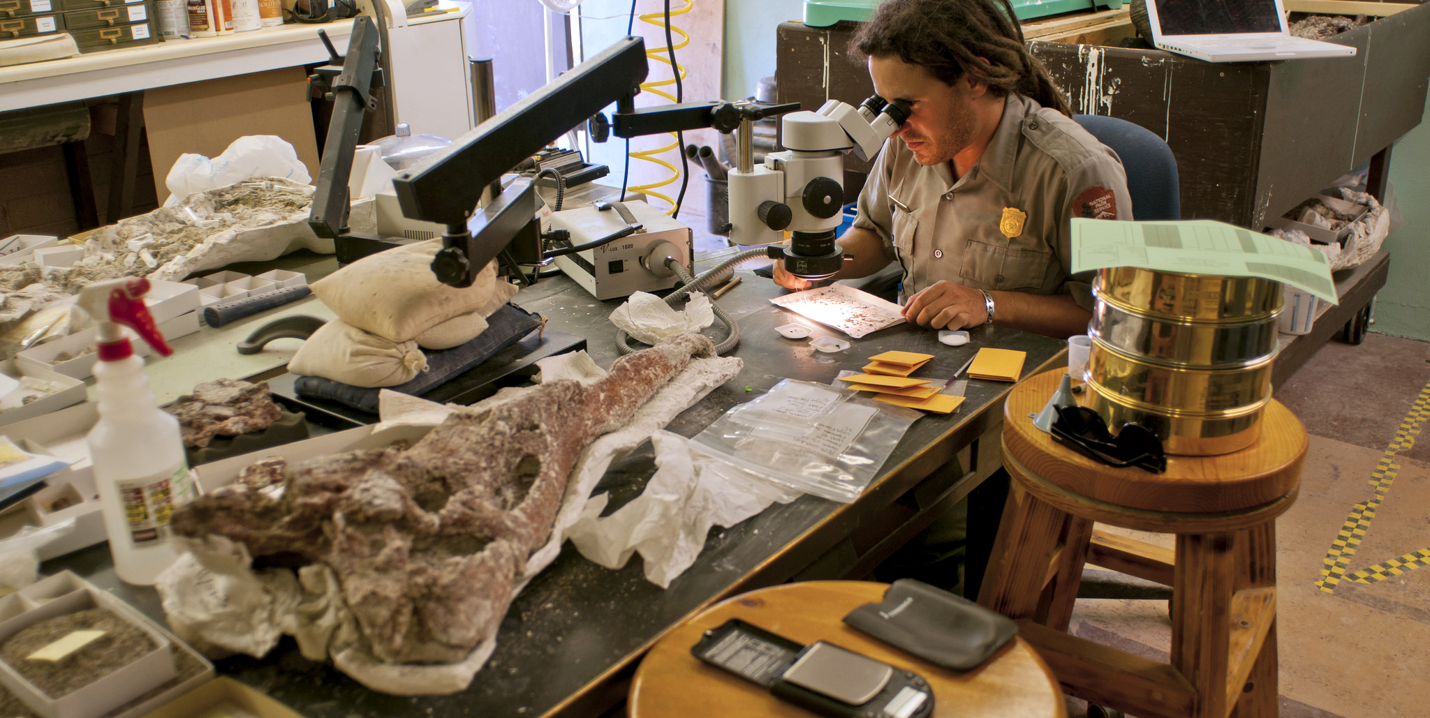 researcher looks into microscope in room full of fossils