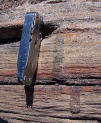 markings on petrified wood that run perpendicular to the grain of the wood