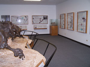 fossils on display in wall-mounted cases and as skeleton reconstructions