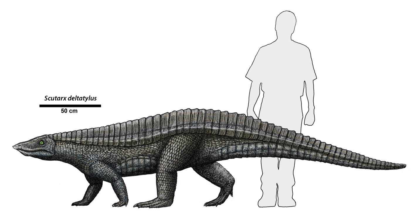 Scutarx deltatylus is a large reptile recently found in the park