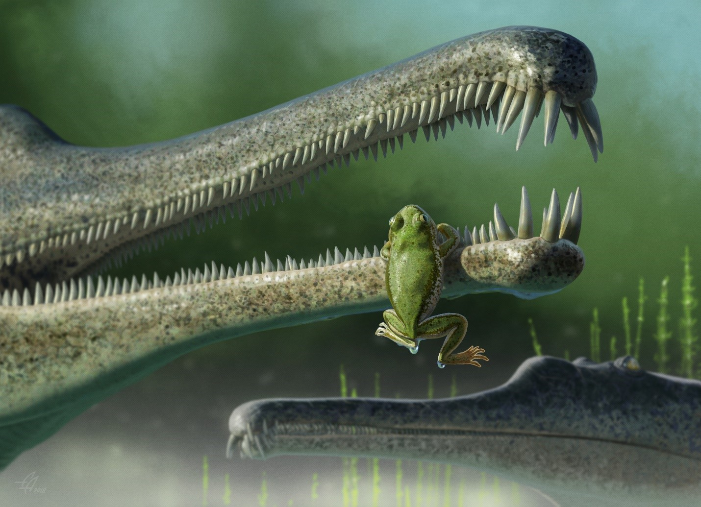 A Triassic frog clings to the snout of a phytosaur
