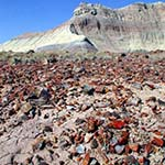 colorful petrified wood pieces cover ground