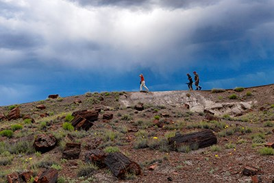 Visitors walk among the petrified wood at Long Longs