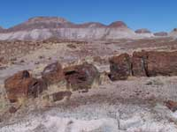 petrified log and color-banded badland hills