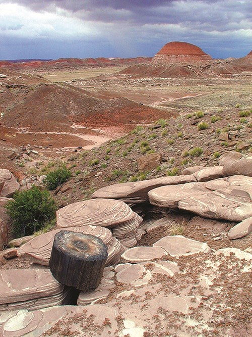 Petrified wood and badlands in the Petrified Forest National Wilderness Area