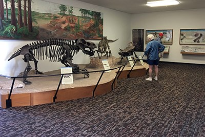 Visitors looking at fossil bone displays in Rainbow Forest Museum
