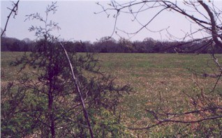 View of Clemmon's Field from the Federal battleline.