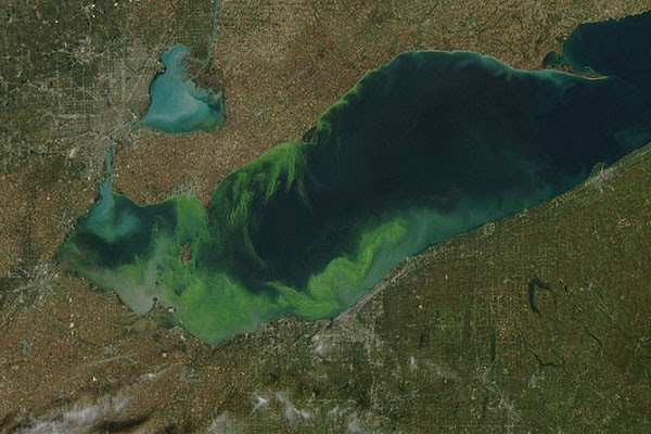 Harmful Algal Blooms covering all of Lake Erie