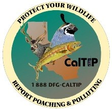 Report Poaching and Polluting in California (call 1-888-DFG-CALTIP)