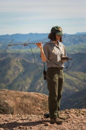 Ranger using radio signal to track condors
