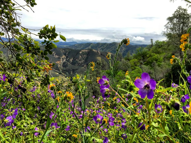 Wildflowers bloom in the foreground with expansive views in the background.