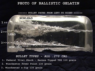 Bullet paths for lead and non-lead bullets through ballistic gel