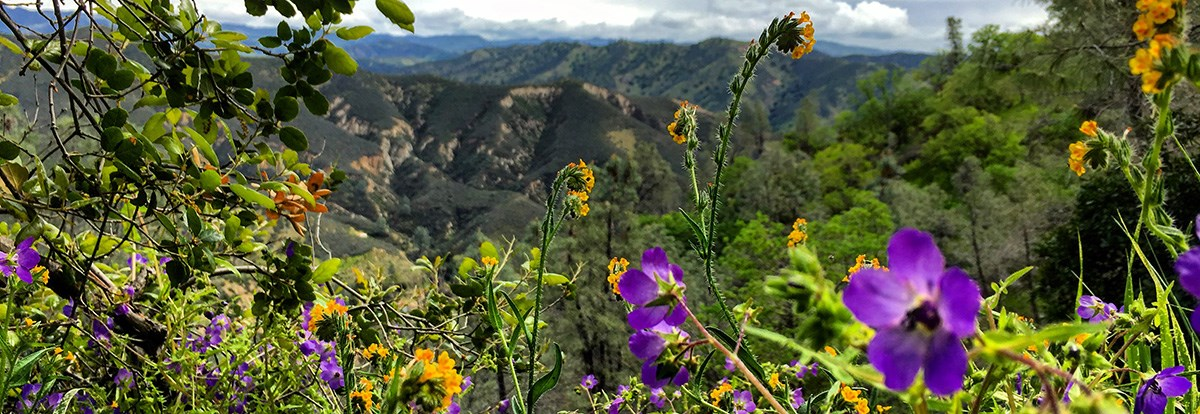 Colorful wildflowers bloom along park trails.