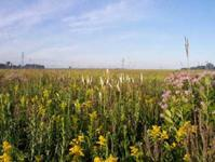 Tallgrass prairie flowers and grasses
