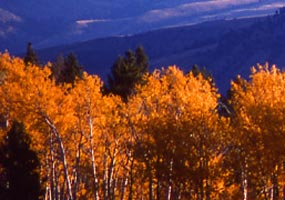 Magnificent fall color and mountains at this National Park invite you to Experience Your America.