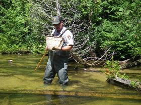 Park ranger standing knee deep in a pond examines dragonfly larvae in a net.