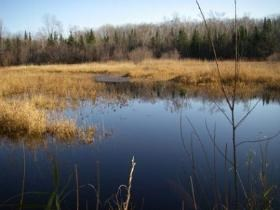 Scene of a typical freshwater marsh with grasses surrounding open water.