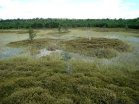 A northern bog showing plants covering the surface with little open water left.