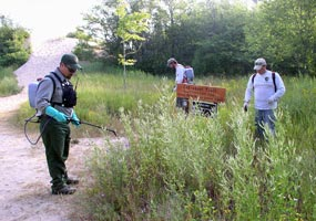 The exotic plant management team uses backpack sprayers to control spotted knapweed along a trail near the Log Slide.