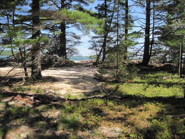 Tall pines growing in a sandy spot with a beach ahead and Lake Superior in the distance.