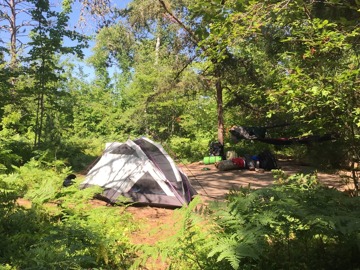 Tent in forested backcountry spot