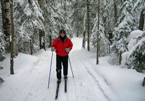 Cross country skier surrounded by the forest and snow.