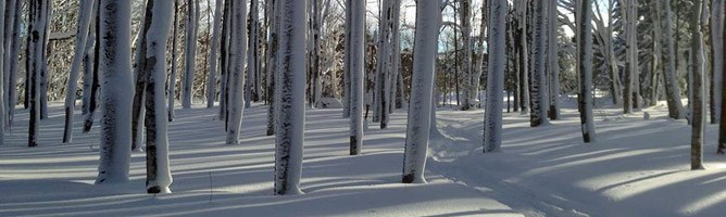 Sunlight falls on a snow-covered forest along hte Grand Marais Cross Country Ski Trail.