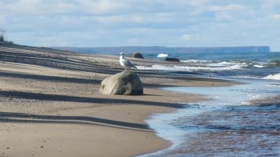 A gull rests on a rock along the Lake Superior shoreline at Hurricane River Beach.
