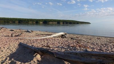 Pink sand makes up part of the beach. Water-worn tree trunks are on the beach. Calm Munising Bay.