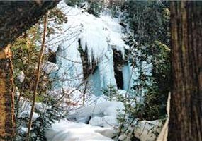 Spectacular ice columns shine along the trees.