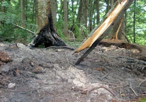 This fire scar resulted from a backpacker's illegal campfire that was not extinguished.