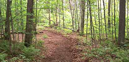 The trail to Sevenmile Creek invites hikers to explore the north country.