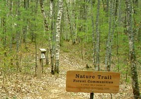 The White Birch Nature Trail begins at Twelvemile Beach Campground.