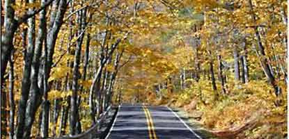 Miners Castle Road under a yellow canopy of leaves in fall.