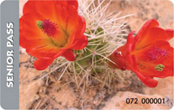 The America the Beautiful Senior Pass depicts two lovely orange desert flowers.